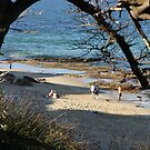Cronulla Beach, New South Wales by aussiebushstick