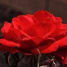 Red Desert Rose by Adam Kuehl