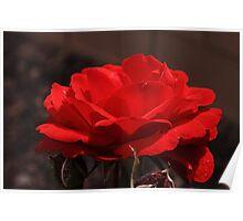 Red Desert Rose Poster