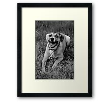 Molly In The Grass I Framed Print