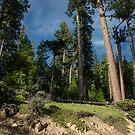 siskiyou mountain range by Jeannie Peters