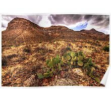 Cactus in the Franklin Mountains Poster