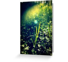 In the glade Greeting Card