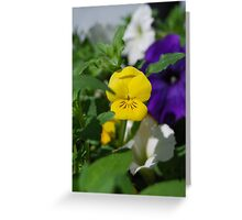 Yellow Pansy Greeting Card