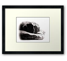 ©PetSeries Don´t Even Think Framed Print