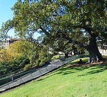 Sydney panorama by PhotosByG
