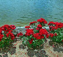 Roses Power at the Lake by Nira Dabush