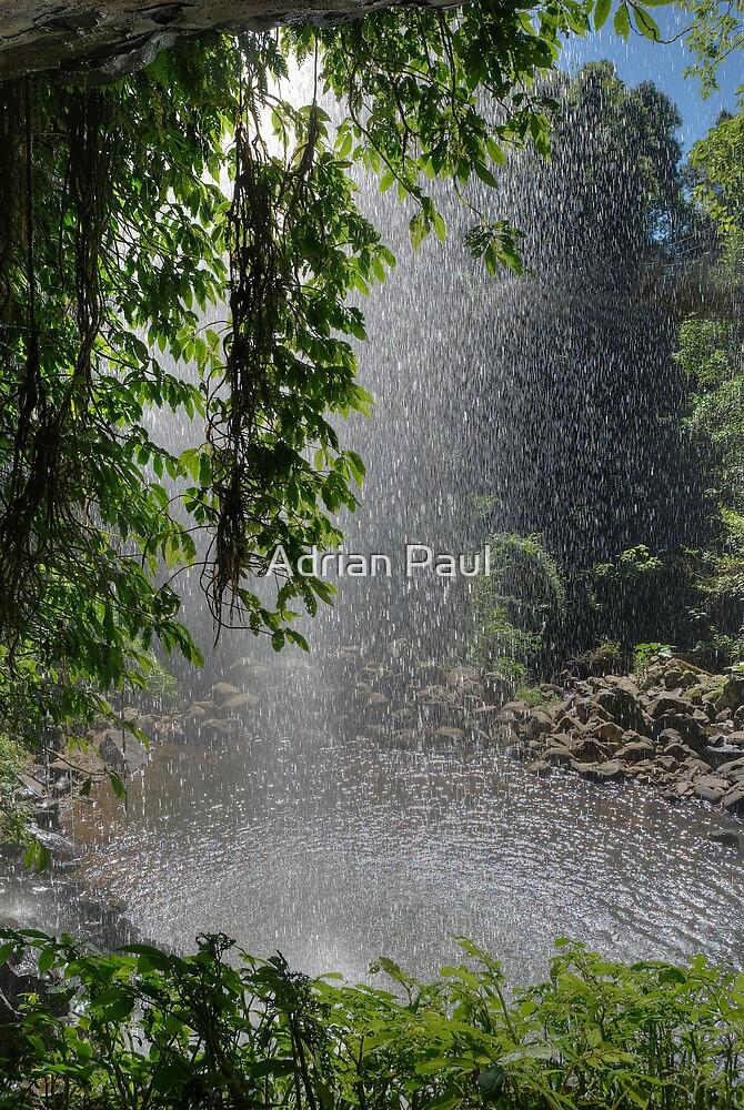 Behind Crystal Shower Falls, Dorrigo, NSW by Adrian Paul
