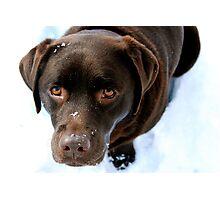 winter lab Photographic Print