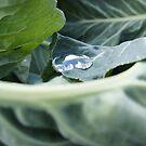 droplet 2 by Sally Barnett