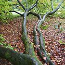 Autumn leaves by Sally Barnett