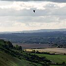 Gliding by Sally Barnett