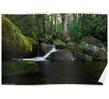 Moss covered landscape Poster
