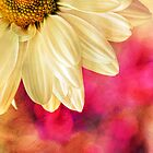 Daisy - Golden on Pink by micklyn