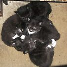 My cat's 5 kittens -(120513)- Digital photo/FujiFilm FinePix AX350 by paulramnora