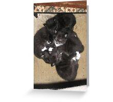 My cat's 5 kittens -(120513)- Digital photo/FujiFilm FinePix AX350 Greeting Card