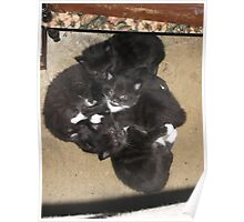 My cat's 5 kittens -(120513)- Digital photo/FujiFilm FinePix AX350 Poster