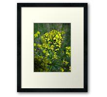 Golden Goodies Framed Print