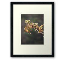 new maple leaves Framed Print