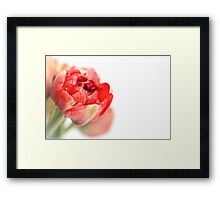 Peony Tulip... Framed Print
