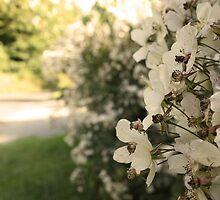 Summer Blossom by Emily Horton