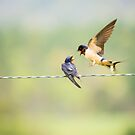 Barn Swallows by J. L. Gould