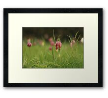 Waving Snake's head fritillaries at Downton Abbey Framed Print