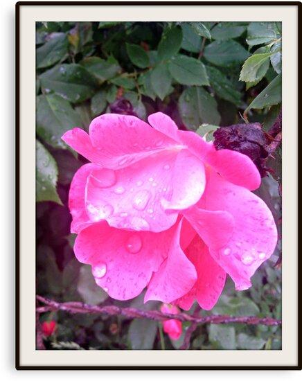 flower by jcarr