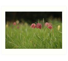 Wild flower meadow at Downton Abbey Art Print