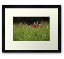 Wild flower meadow at Downton Abbey Framed Print
