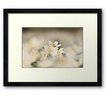 A sea of white, a wood anemone at Downton Abbey Framed Print