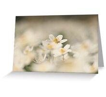 A sea of white, a wood anemone at Downton Abbey Greeting Card