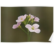 A Cuckoo flower in bloom at Downton Abbey Poster