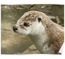 Northern River Otter Poster