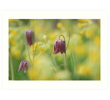Meadow in bloom at Downton Abbey Art Print