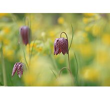 Meadow in bloom at Downton Abbey Photographic Print