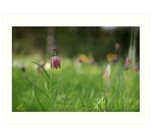 Standing alone, snakes head fritillary at Downton Abbey Art Print