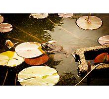 Frog Pond Photographic Print