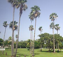 Palm Trees by Nancy Badillo
