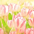 Hot Pink Tulips by Nikella