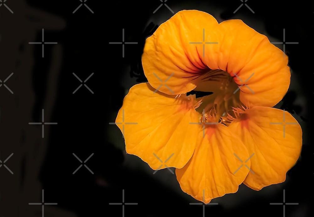 Orange Glow by heatherfriedman