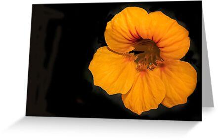 Orange Glow by Heather Friedman