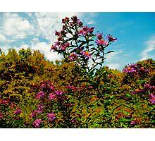 Beautiful Flowers Photographic Print