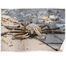 Feelin' Crabby Poster