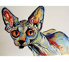 sphynx it up Photographic Print