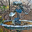 Special Bird Bath by David DeWitt