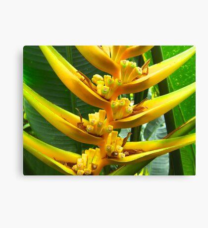 Yellow Flowering Plant Canvas Print