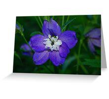 Purple Delphinium Greeting Card