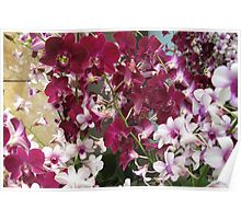 Orchid Dendrobium Poster