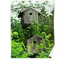 Pair of Birdhouses Poster